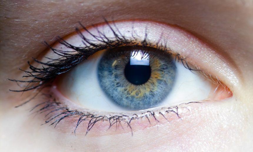 O olho e a visão