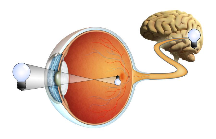 Desenho esquemático de como funciona a visão